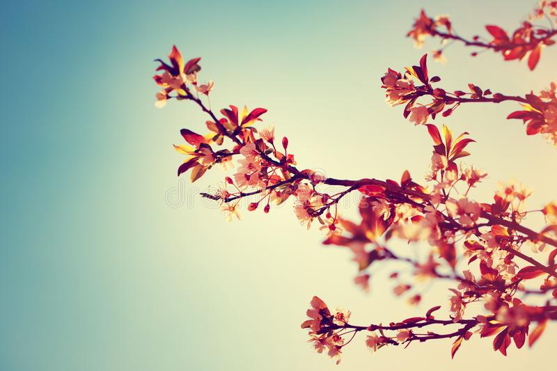Beautiful blooming tree border royalty free stock images