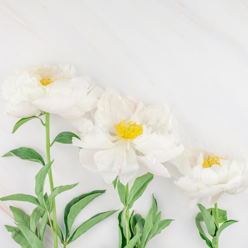 White peony flowers on marble background. Beautiful blooming white peony flowers on marble background with copy space in minimal style, square template for stock images
