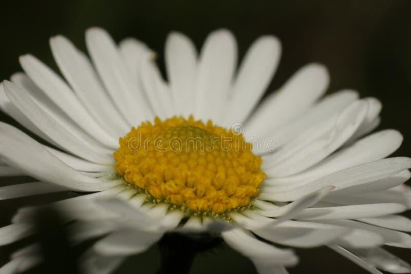 Beautiful blossom closeup - macro photography. Beautiful flower blossom closeup - macro photography royalty free stock photography