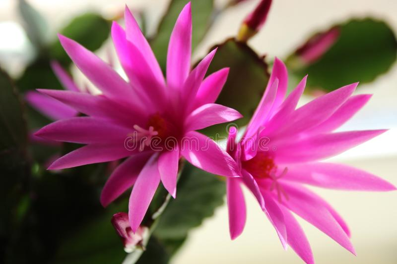 Beautiful blossom in the color pink stock images