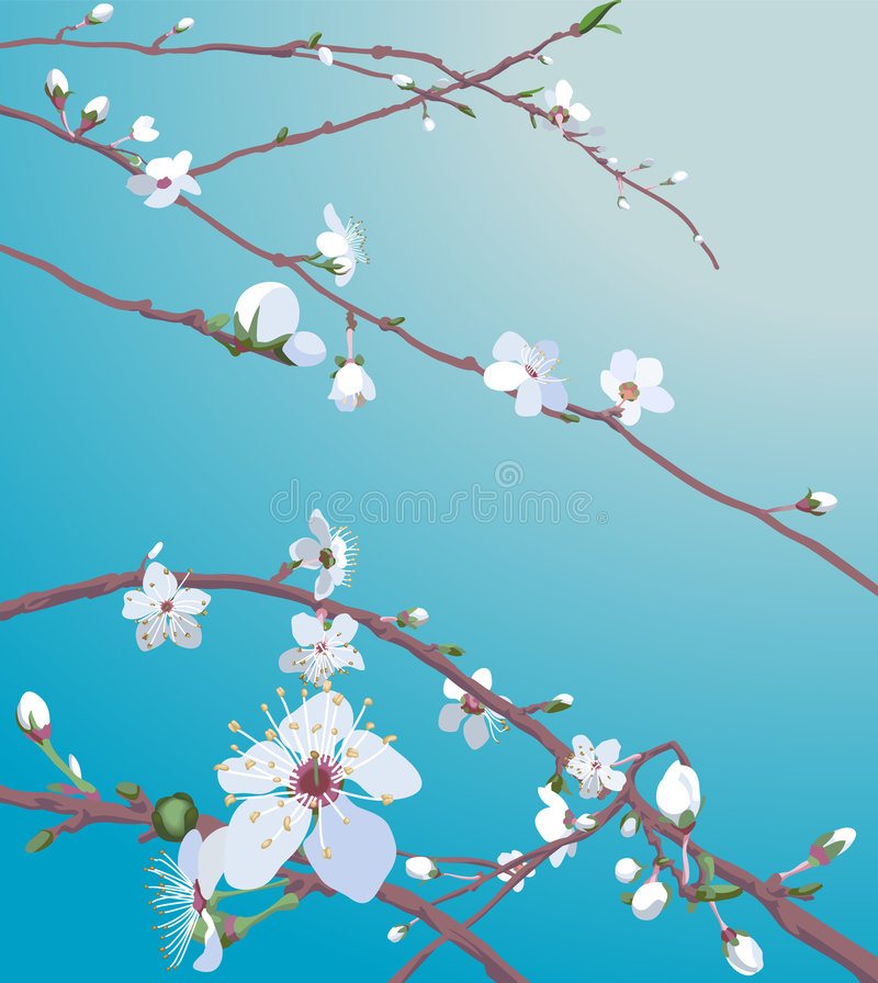 Beautiful blossom flowers. On a tree. No meshes used vector illustration