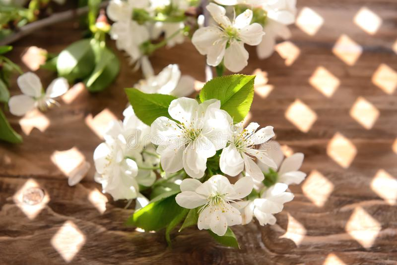 Beautiful blossoming branch on wooden background royalty free stock images