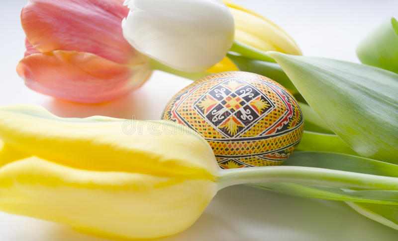 Beautiful blossoming tulip flower and Easter colorful eggs. Floral design. Nature background. Spring background with beautiful fre royalty free stock image