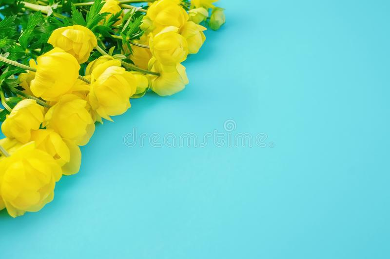Beautiful blue background with yellow buttercup flowers with copy space.  stock image