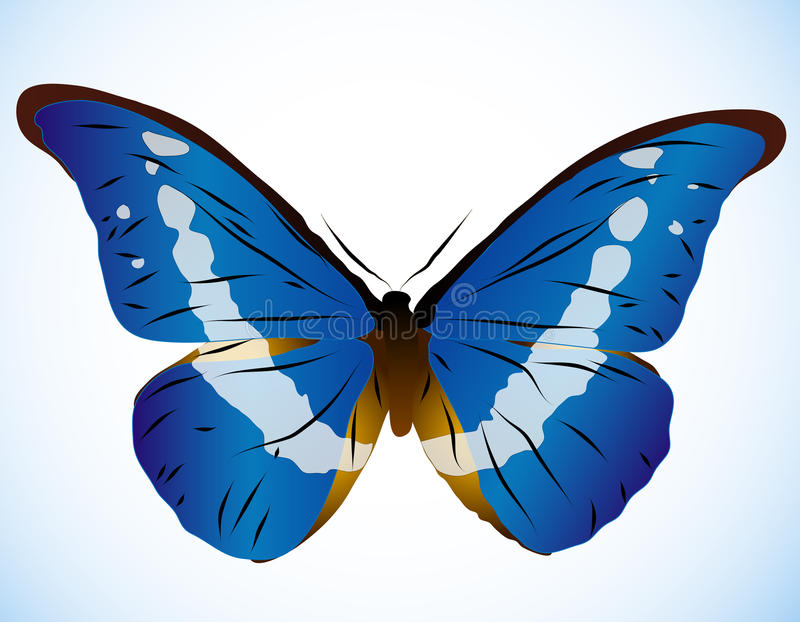 Beautiful blue butterfly royalty free illustration