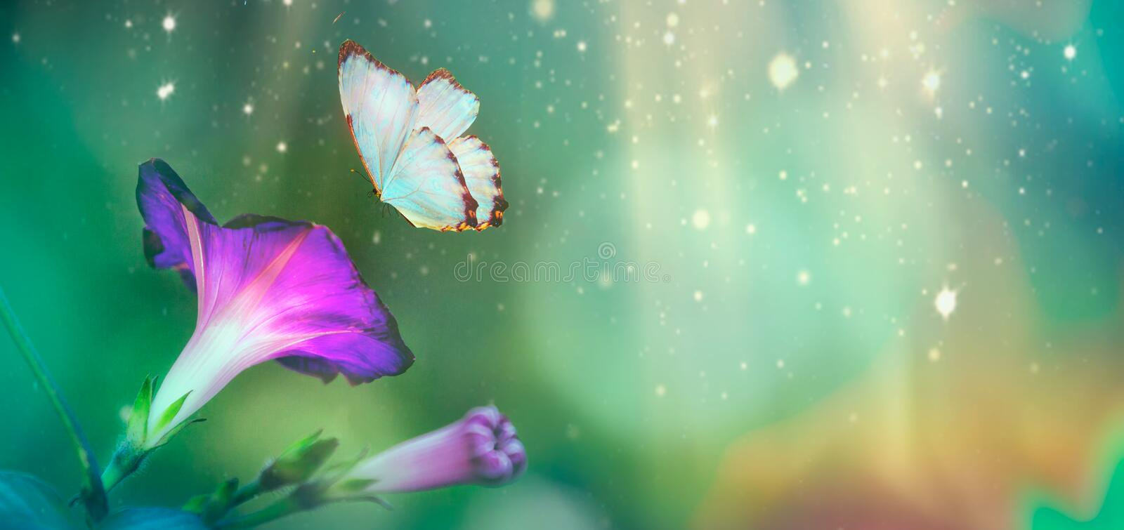 Beautiful blue butterfly and blossoming petinia in spring at Sunrise on blue and pink background macro. Amazing elegant artistic royalty free illustration