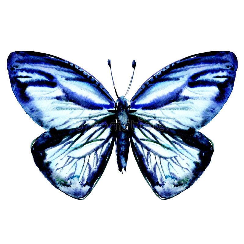 Beautiful blue butterfly isolated on white, top view royalty free illustration