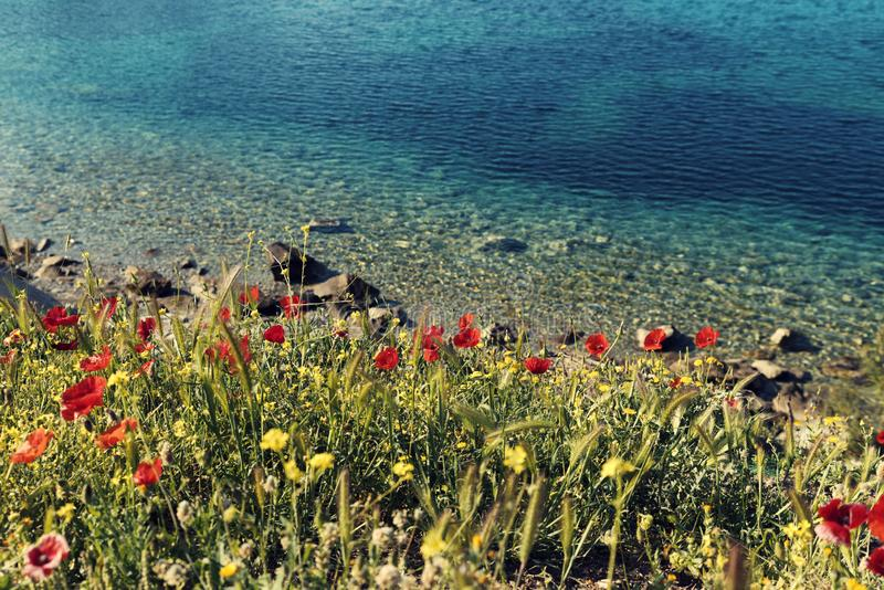 Beautiful blue clear water of Mediterranean sea and red poppies in Greece Sithonia No people royalty free stock photo