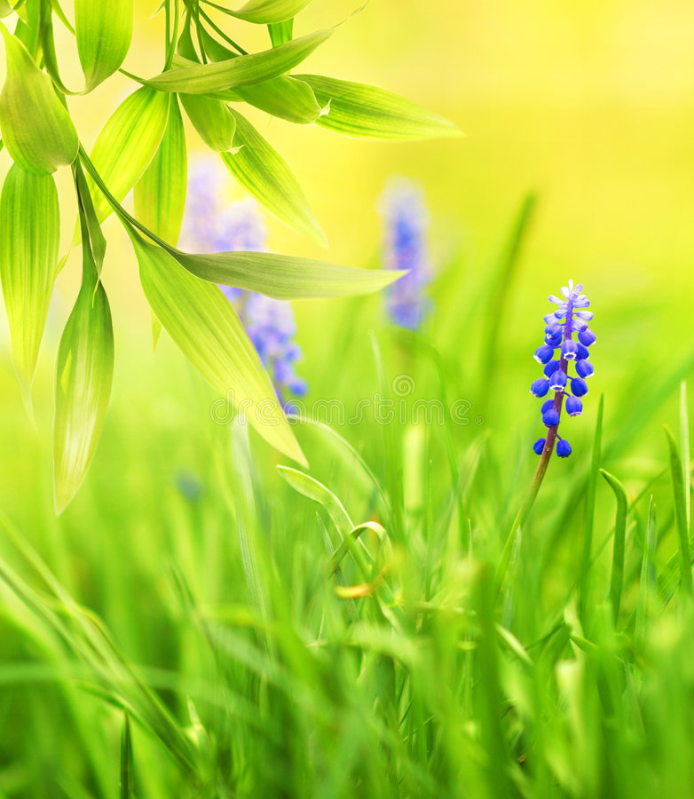 Beautiful blue flowers stock photography