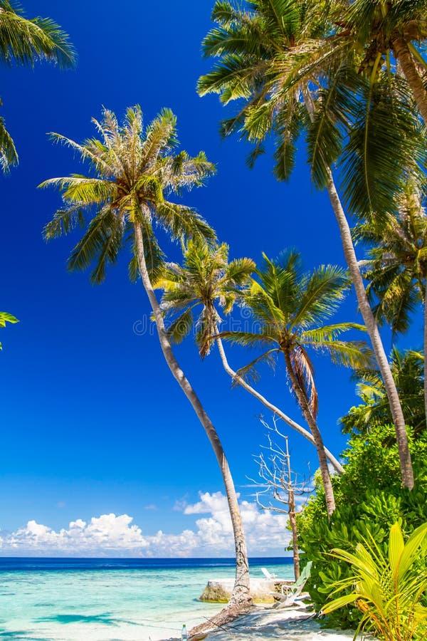 Beautiful blue lagoon beach, Maldives. Summer travel concept, beautiful blue lagoon in Indian ocean, exotic island with tropical palm trees, wonderful landscape stock photos