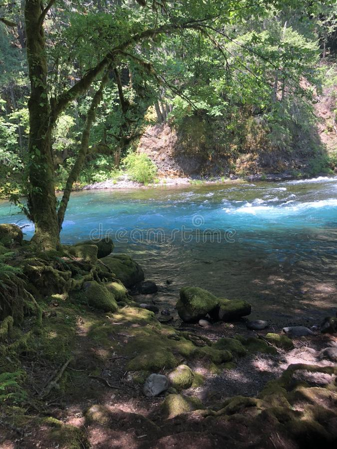 Beautiful blue rapids rushing by royalty free stock photos