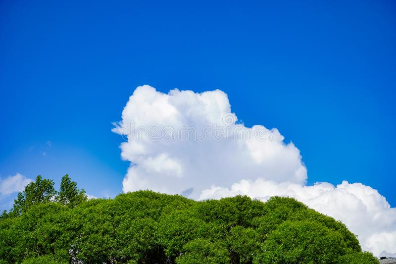 Beautiful Blue Sky Background with White Clouds and Tree. Picture for Summer Season.  stock photo