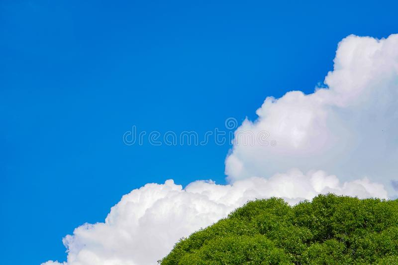 Beautiful Blue Sky Background with White Clouds and Tree. Picture for Summer Season.  stock image
