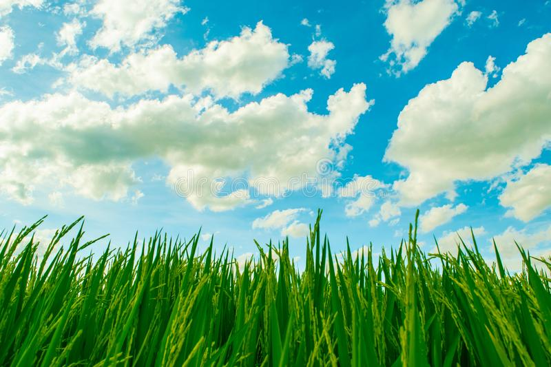Beautiful blue sky and white cloudy background over the green field in countryside landscape of Thailand. royalty free stock images