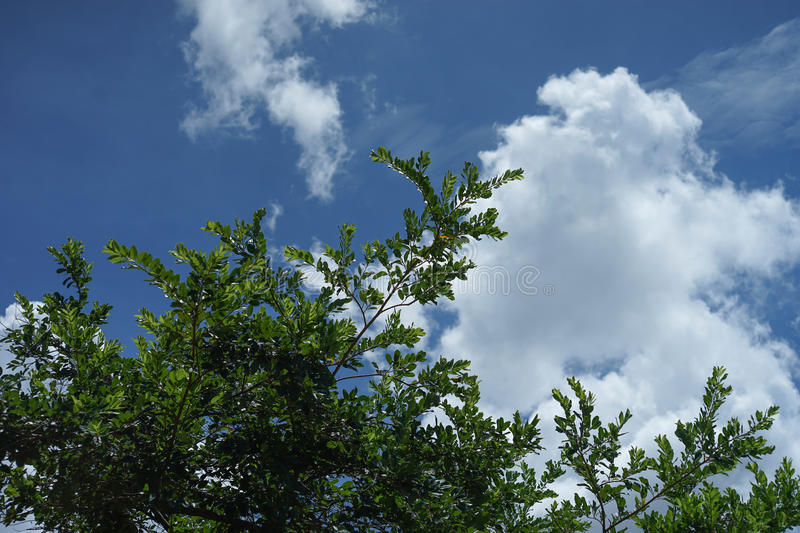 Beautiful blue sky and cloud with leave and branch of tree on foreground stock photo