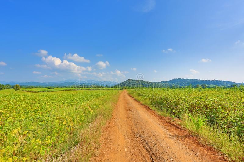 Beautiful blue sky and country road to the mountain. Rural green field and trees.  stock photos