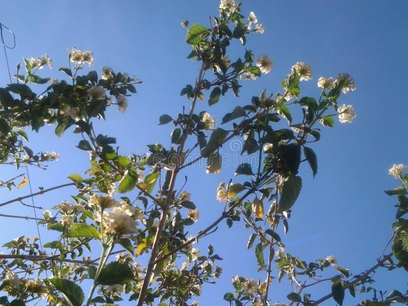 Beautiful blue sky flowers tree spring royalty free stock photo