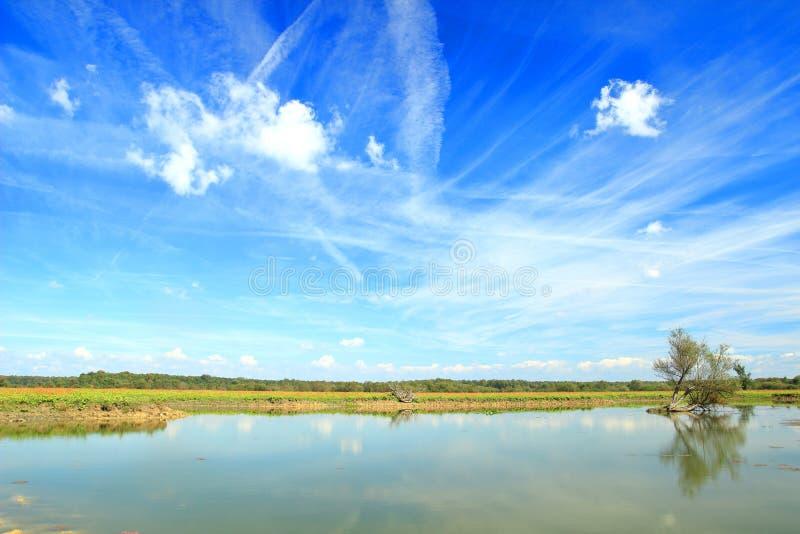 Beautiful blue sky with white clouds above lake. In Nature park `Lonjsko polje`, Croatia stock images