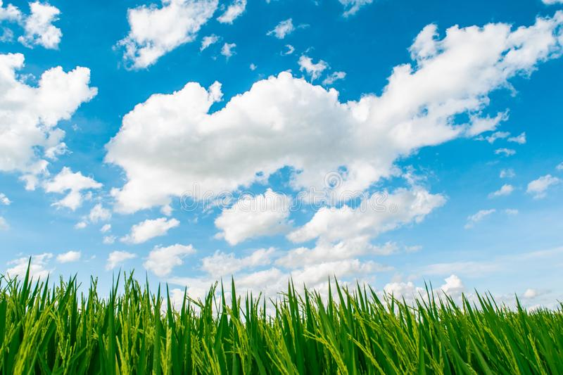 Beautiful blue sky and white cloudy background over the green field in countryside landscape of Thailand. royalty free stock photo