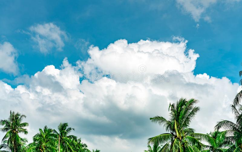 Beautiful blue sky and white cumulus clouds against coconut tree in happy and chill out day. While away time on tropical summer stock photo