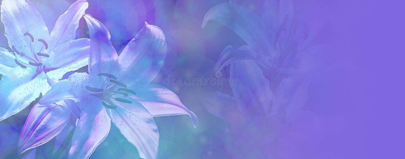 Beautiful Blue Wedding Lilies Banner stock images