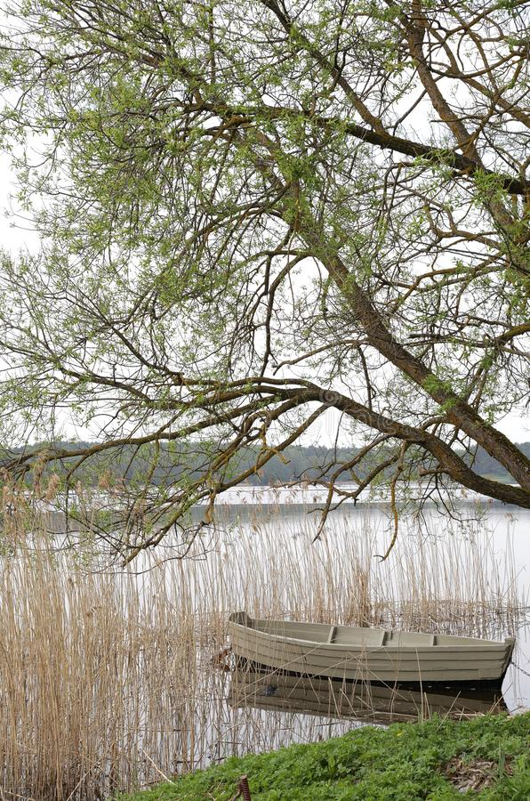 Beautiful boat on a river under a tree royalty free stock image