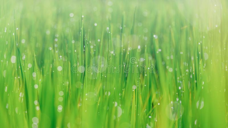Beautiful bokeh background blur. grass and fog in the morning and drop water. abstract green blur background.  stock image