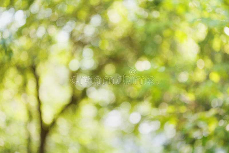 Beautiful bokeh background of defocused tree. Natural blurred backdrop of green leaves. Summer or spring season. stock photography