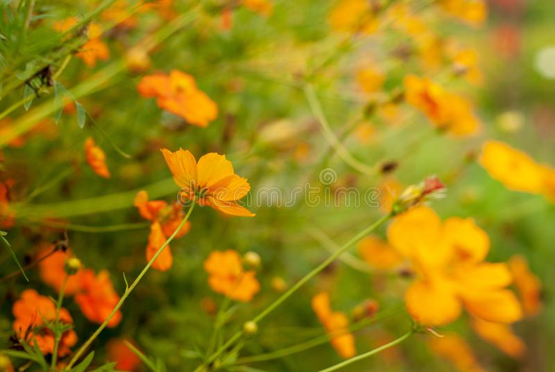 Beautiful bokeh effect from flowers plantation stock images