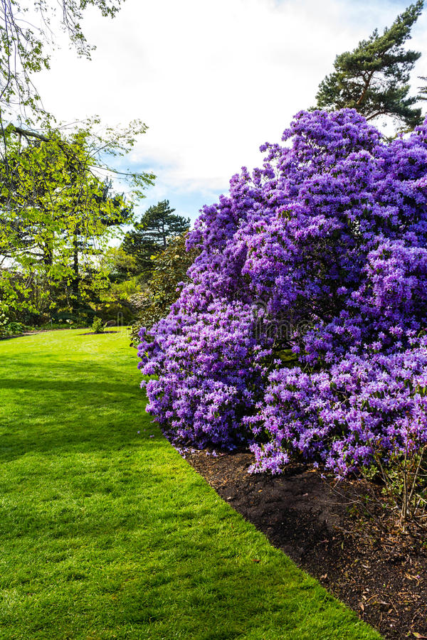 Beautiful, botanic garden in Spring. Beautiful, botanic garden full of flowers in Spring royalty free stock photos