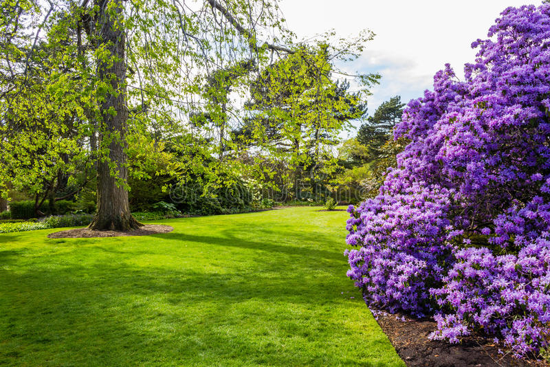 Beautiful, botanic garden in Spring. Beautiful, botanic garden in Springtime stock photography