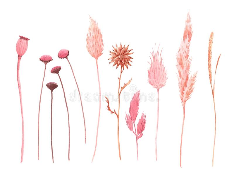 11 Watercolor Dried Grass | Watercolor, Grass drawing, Illustration