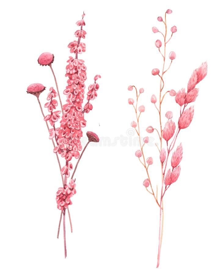 Free Beautiful Bouquet Composition With Watercolor Herbarium Wild Dried Grass In Pink And Yellow Colors. Stock Illustration. Royalty Free Stock Photography - 169619727