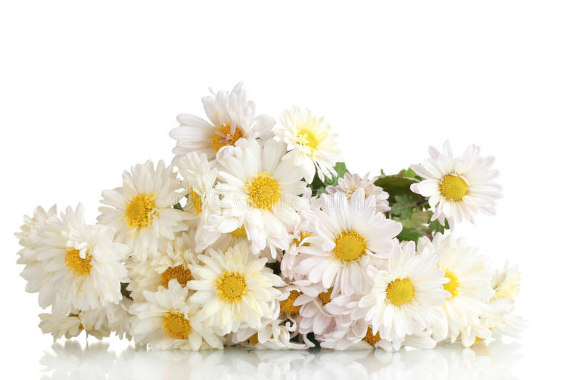 Beautiful bouquet of daisies royalty free stock photography