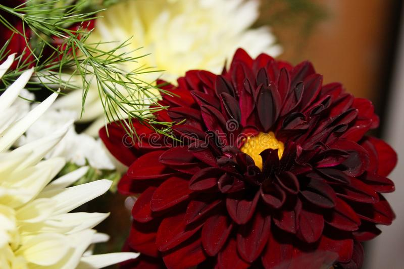 Beautiful bouquet of flowers stock images