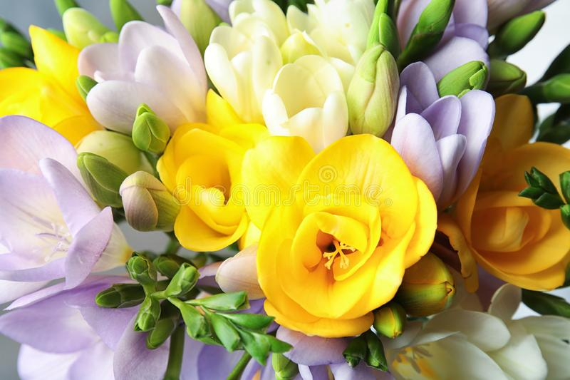 Beautiful bouquet of fresh freesia flowers as background royalty free stock photo