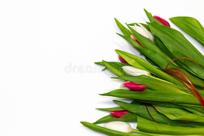 Beautiful bouquet of fresh tulips with red ribbon isolated on white background. Copy space for text, greeting card, gift. Concept stock images