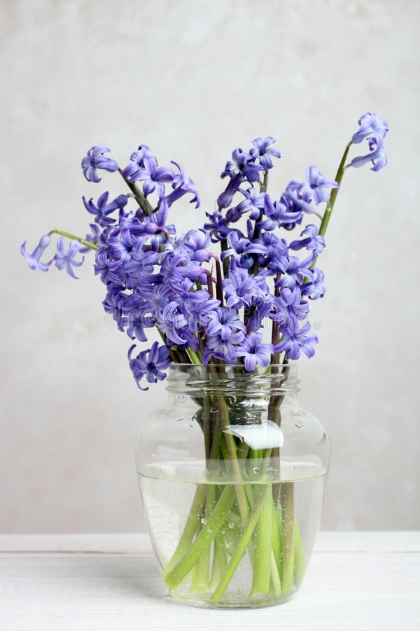 Bouquet of hyacinth in a vase royalty free stock images