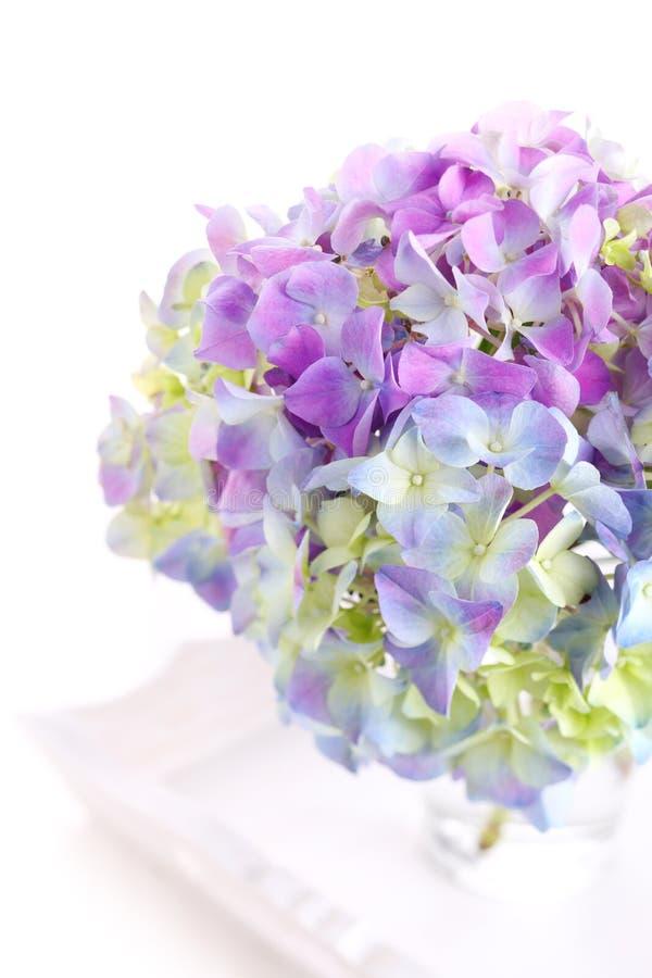 Beautiful bouquet of hydrangeas stock images