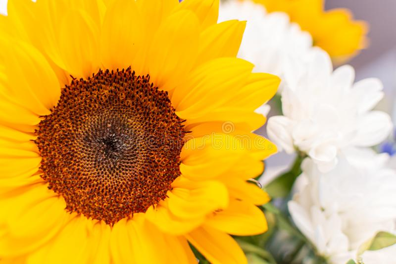 Beautiful bouquet of mixed flowers sunflower, background on full screen stock images