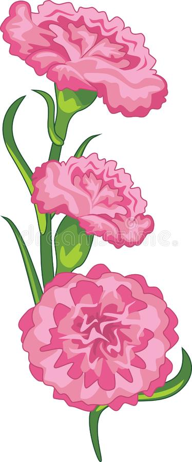 Beautiful bouquet of pink carnations royalty free stock images