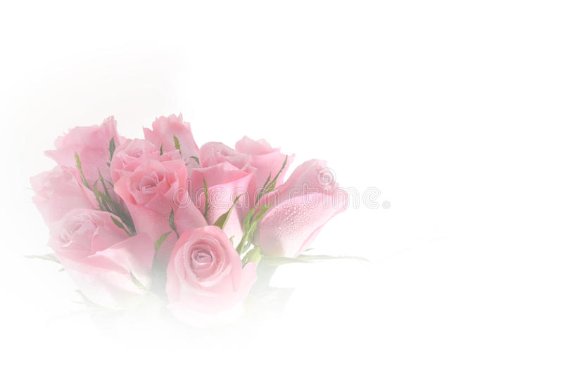 Beautiful bouquet of pink roses flower made with color filters royalty free stock images