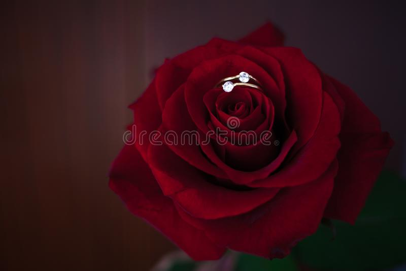 Red roses on the sun flare background stock photos