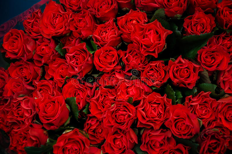 Beautiful bouquet of red roses. To your loved ones prazniki, birthday, valentines day, wedding royalty free stock image