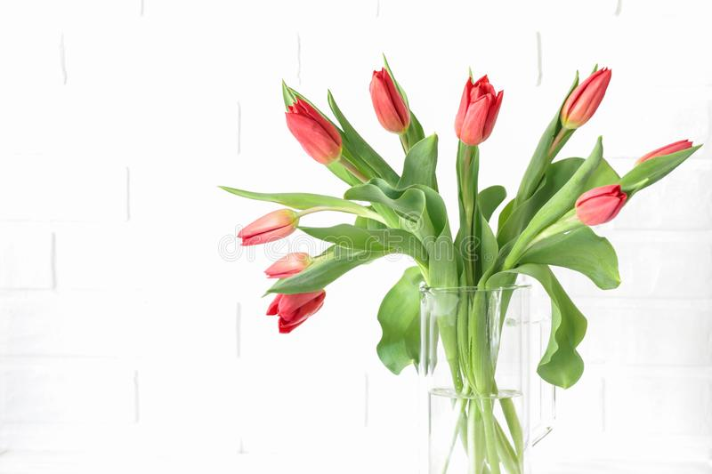 Beautiful bouquet of red tulips in a vase isolated on the white background with copy space for your text. Horizontal stock illustration