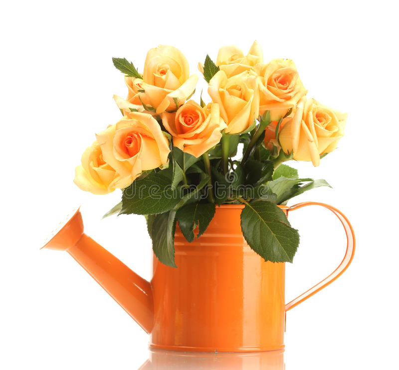 Beautiful bouquet of roses in watering can royalty free stock photos