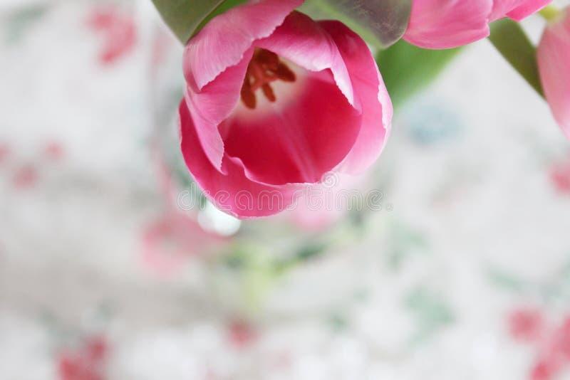 Beautiful bouquet of tulips. Pink tulips. Postcard. stock photos