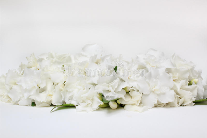 Beautiful bouquet of white Gardenia jasminoides flower. stock image