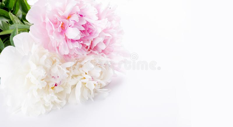 Beautiful Bouquet of white and light pink peonies on white background stock photos