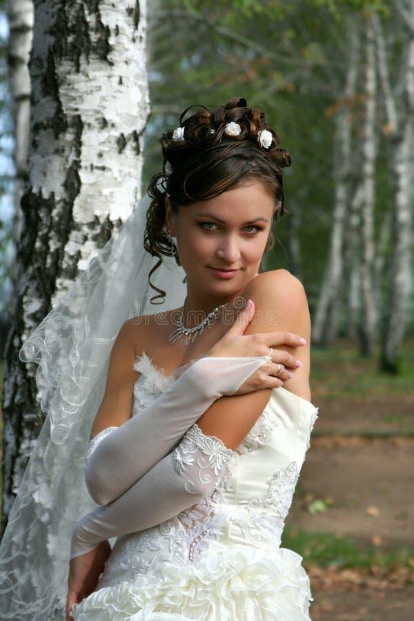 Download Beautiful Bride In Birch Grove Stock Image - Image: 8352421